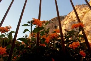 Flowers in Sorrento, Italy